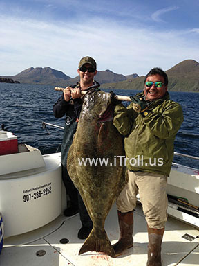 Monster Halibut caught with iTroll!