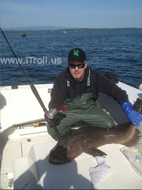 Matt's Ling Cod caught with iTroll!